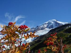 flower-hike